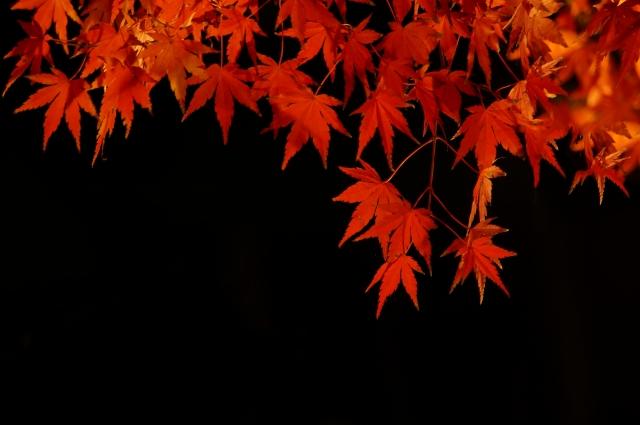 京都,嵐山,ライトアップ,紅葉,時期