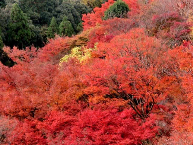 京都,紅葉,名所,見頃,厳選